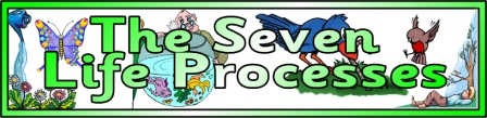 Free 7 Life Processes Banner