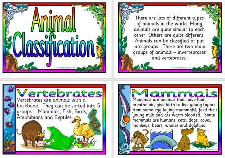 Free Science Teaching Resource Animal Classification