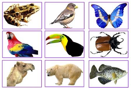 cross breeding animals with humans