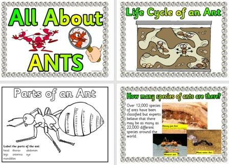 Free Ants Posters Life Cycle Facts and More