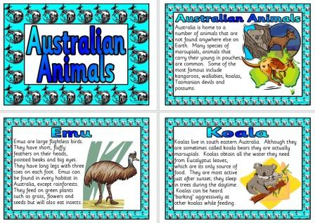 Australian Animals Display Posters Set Of 12 Fact Cards Include Title Poster Introduction Red Kangaroo