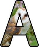 Free Barn Owl alphabet, digital letters, display lettering sets.