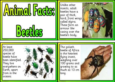 Beetle animal facts free printable posters for display