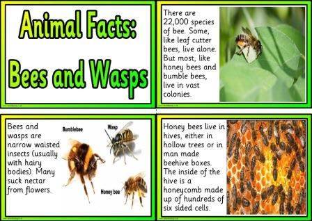 Free animal facts cards about bees and wasps