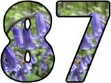 Free printable Bluebell lettering sets.