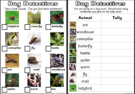 Free printable bug detectives recording sheets includes 3 minibeast