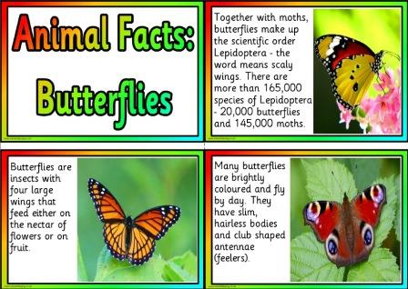 Free Printable Animal Facts Posters - Butterflies