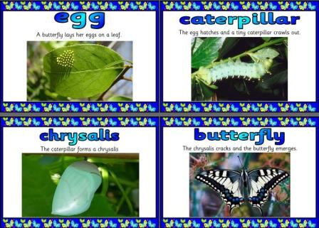 Free Spring Teaching Resources, downloadable Butterfly Symmetry ...