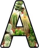 Free printable instant display digital lettering with a cacti plant background.