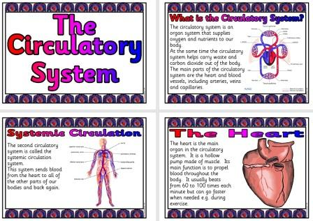 Free Science Teaching Resource Circulatory System
