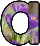 Free printable Crocus flower lettering for display