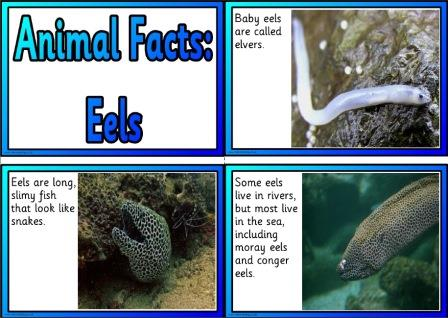 Free Printable Animal Facts Posters - Eels