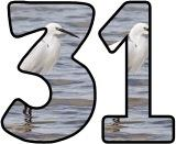Free instant display letter sets for classroom bulletin board displays with a Egret background image.