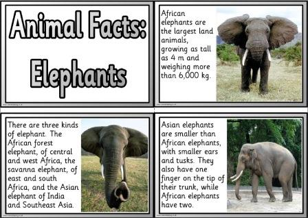 Free printable elephants information fact cards