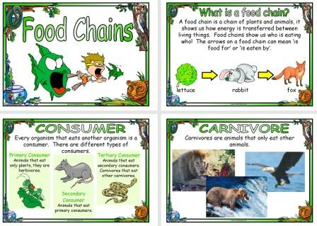 picture of food chain and food web. which look at food chains.