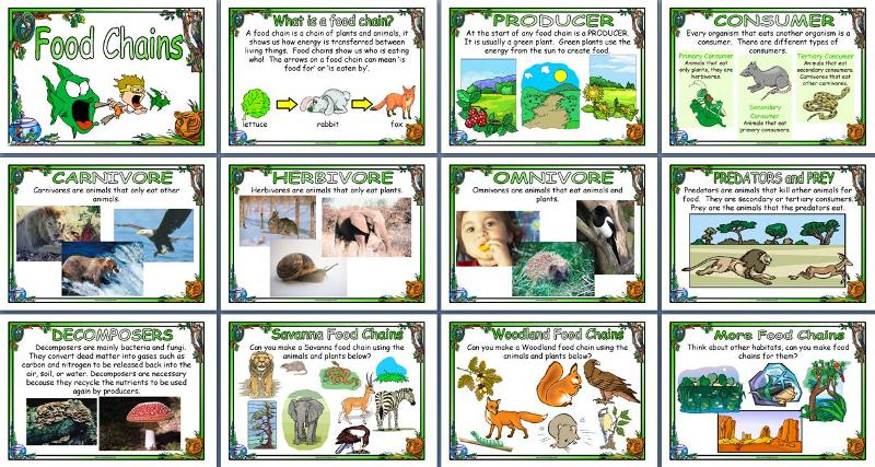 photograph relating to Food Chain Printable referred to as KS2 Science trainer tool, Meals Chains printable posters
