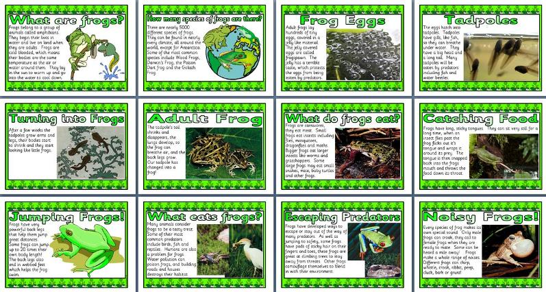 HD wallpapers frog life cycle worksheets for kids