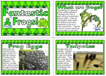 Printable Frogs Posters Life Cycle Facts etc