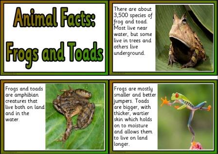 Free frog and toad animal facts printable information cards
