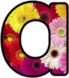 Free Gerbera Daisy flowers display lettering sets, digital letters, flower letters