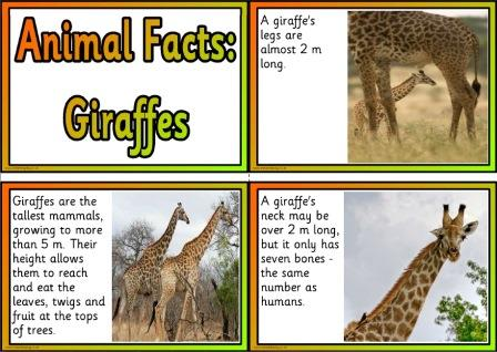 Free Printable Animal Facts Posters - Giraffes