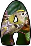 Free printable Goldcrest bird background digital classroom display lettering, letters for teaching.
