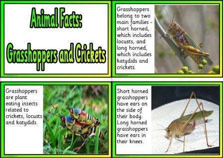 Free Animal Facts printable flashcards or posters.