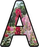 Free printable Hollyhock flower lettering for display