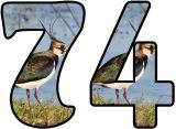 Free printable Lapwing background digital lettering sets for classroom bulletin board display.