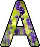 Free printable Lavender flower lettering for display