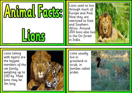 Printable animal facts information cards - lions