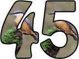 Free printable instant display digital lettering sets with a Nuthatch photo background.