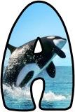 Orca Whale letters