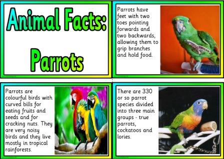 Free printable Parrots information fact cards