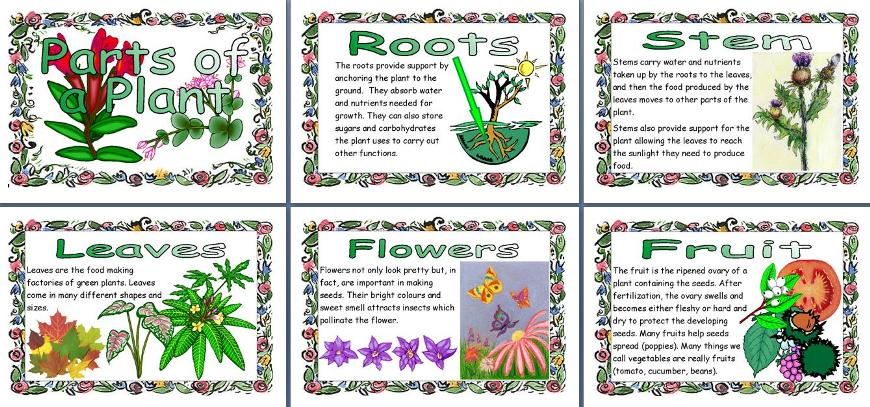 Ks2 science teacher resource parts of a plant printable posters for ks2 science teacher resource parts of a plant printable posters for classroom display ccuart Images