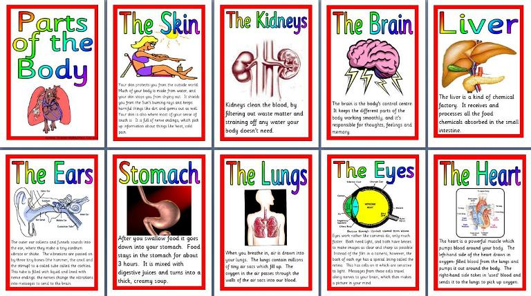 Ks2 science teaching resource parts of the body human anatomy ks2 science teaching resource parts of the body human anatomy printable posters for classroom display ccuart Images