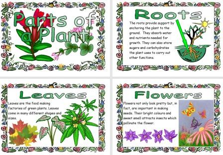 Ks1 and ks2 science teaching resources posters for classroom ks1 and ks2 science teaching resources posters for classroom display life processes and living things including micro organisms habitats food chains ccuart Images