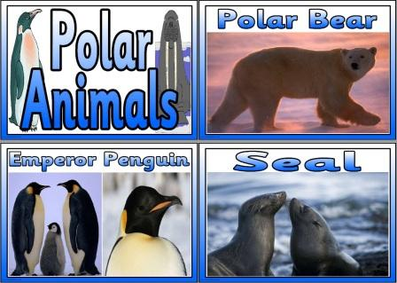 adaptive features of four animals in polar region