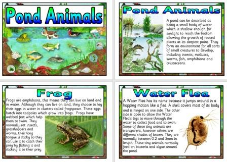 Pond Animals, Pond dipping display posters, information cards