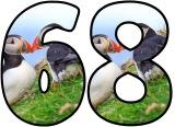 Puffin background free printable digital number sets for classroom display.