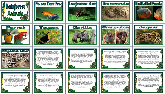 Geography Posters - Match the Rainforest Animals to their ...