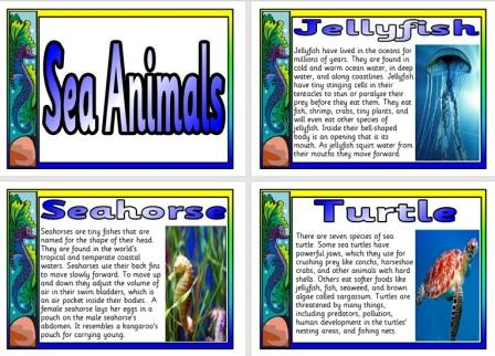 Free Science Posters Sea Animals