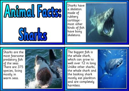 Free Printable Animal Facts Posters - Sharks