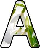 Free printable Snowdrop flower lettering for display