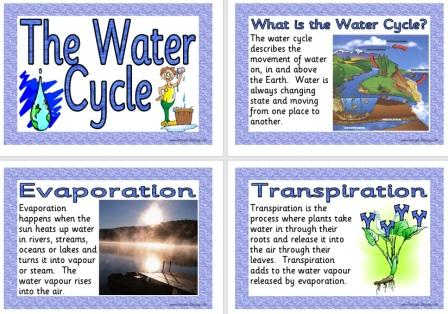 Mrs. Terry project: Water Cycle